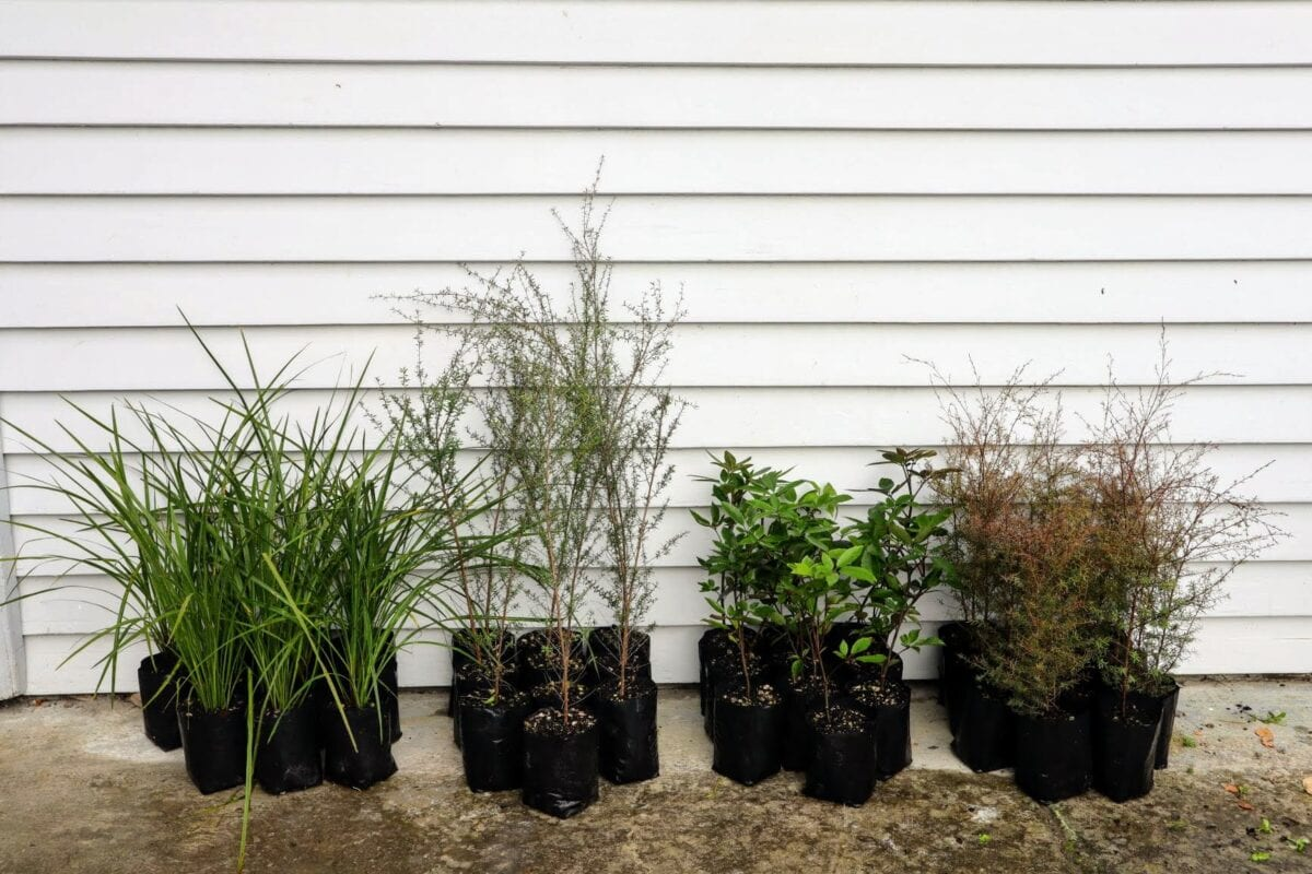 Plants Winter 2021 Edited